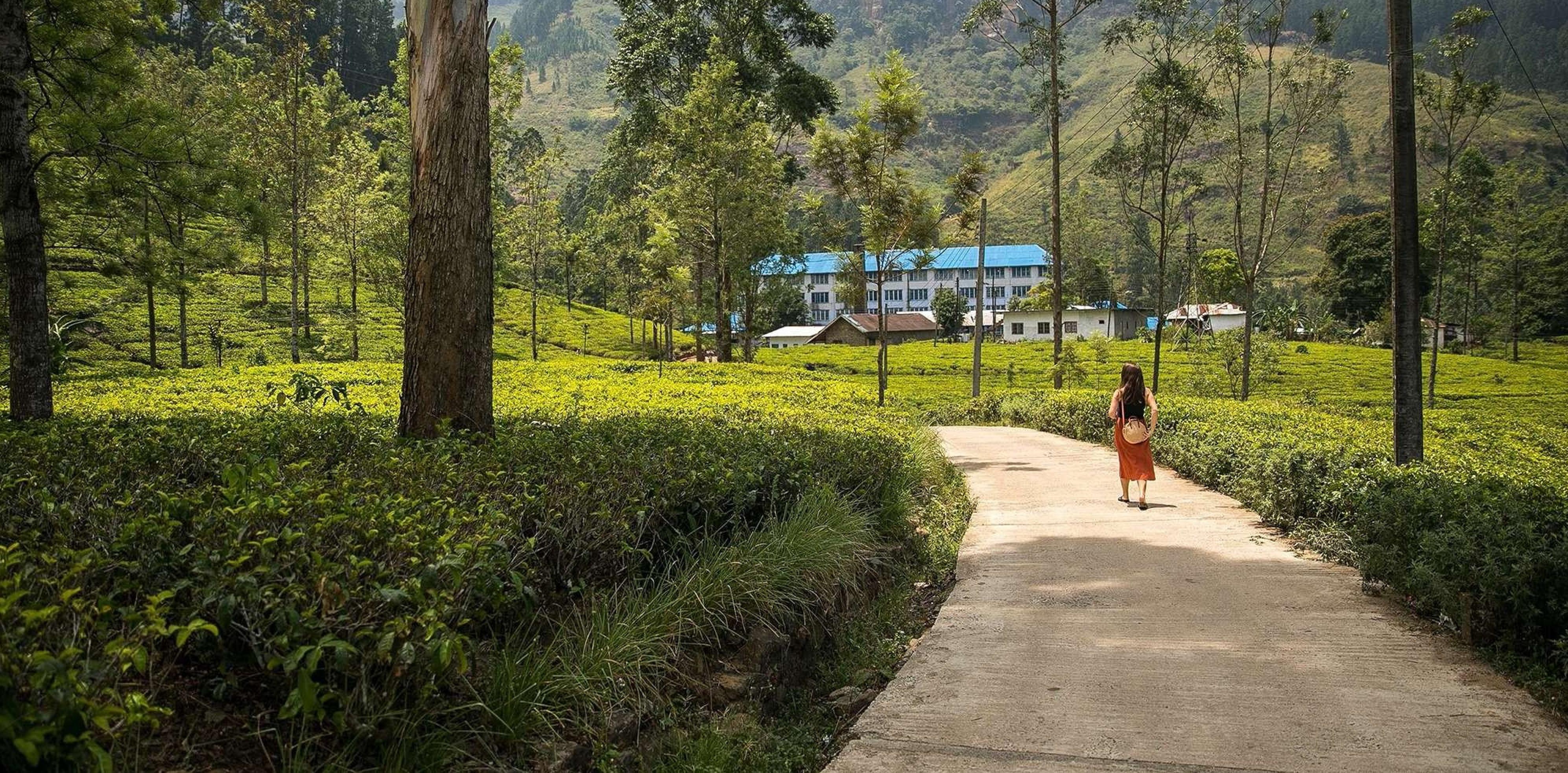 Best 5 Days Tour of Sri Lanka
