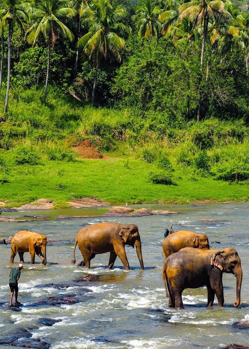 Pinnawala-Elephant-Orphanage-Srilanka