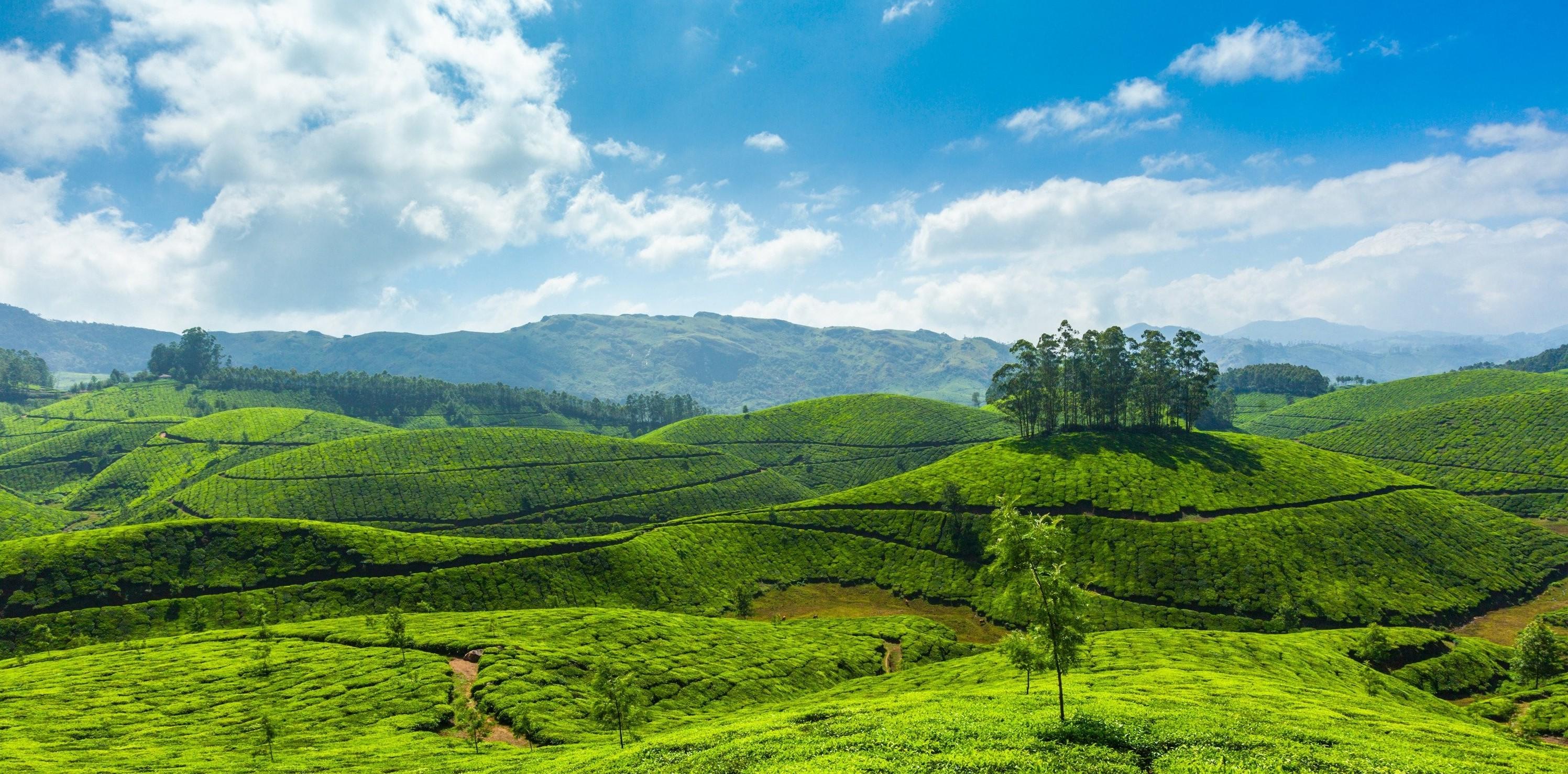 munnar-tea-plantations-kerala