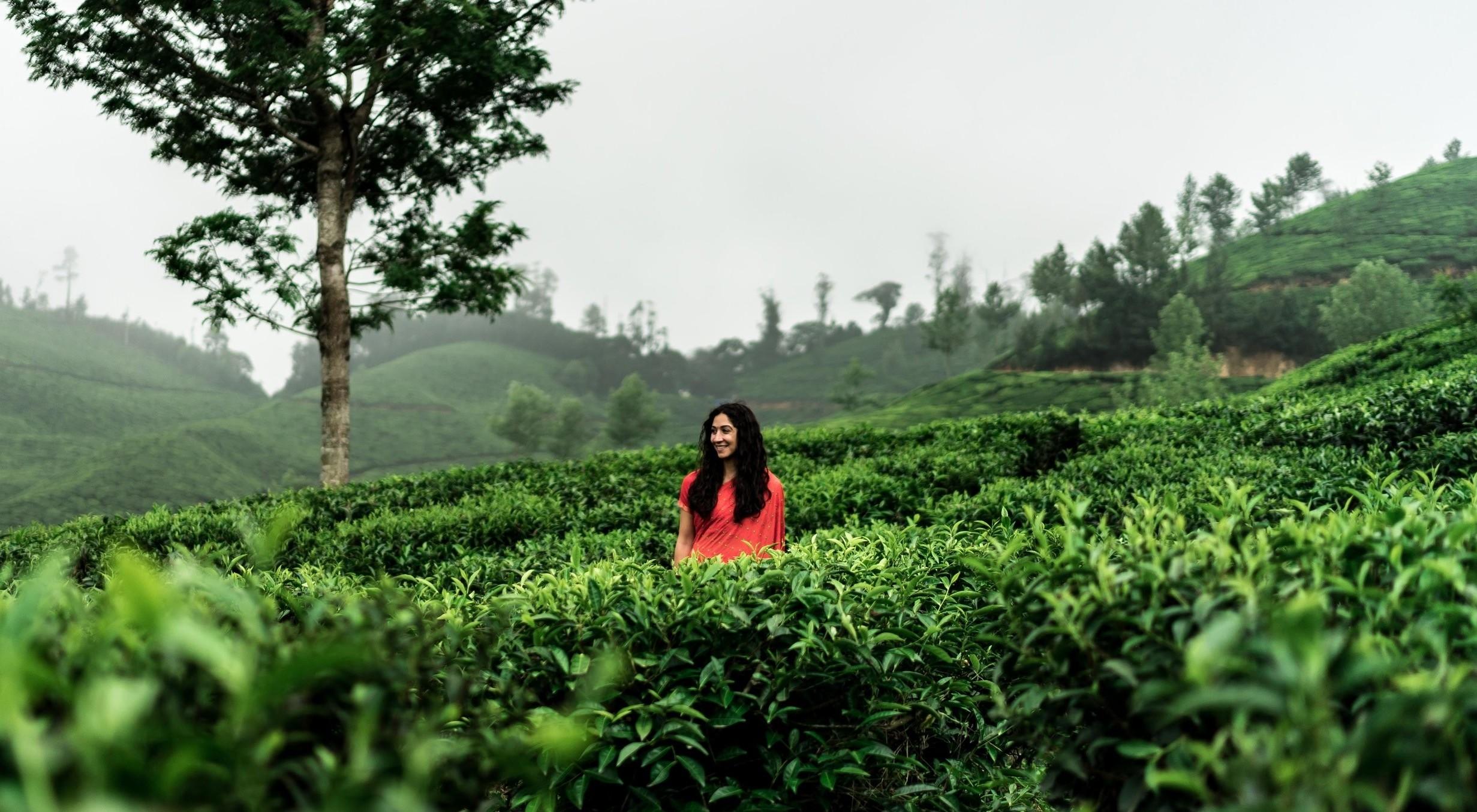 munnar-the-land-of-tea